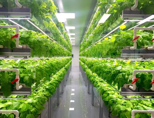 Vertical Farming Industry Projected to Explode Globally